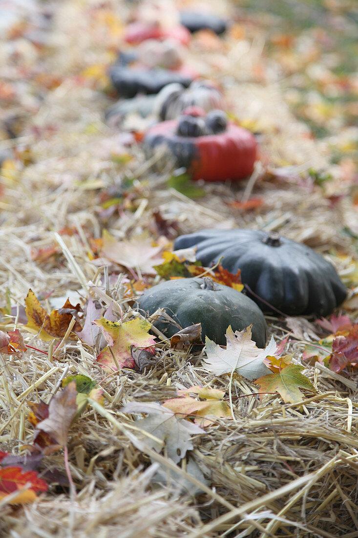 Pumpkins of bales of hay