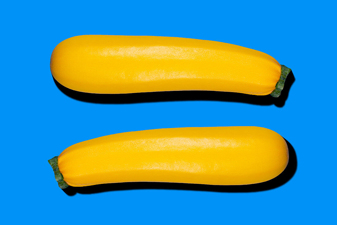 Two yellow zucchini on a blue background