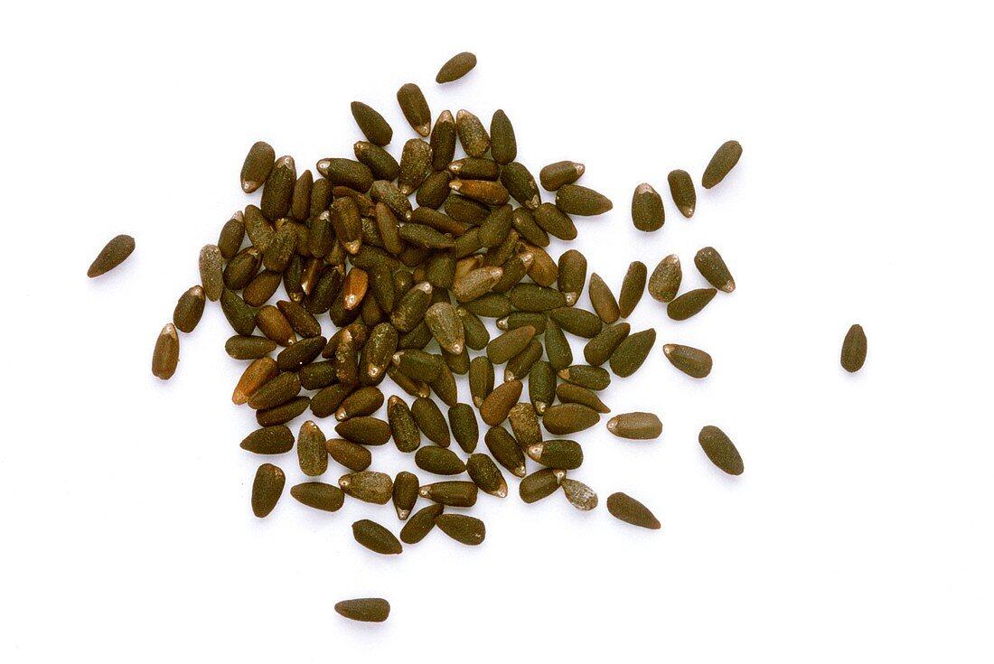 A heap of hyssop seeds