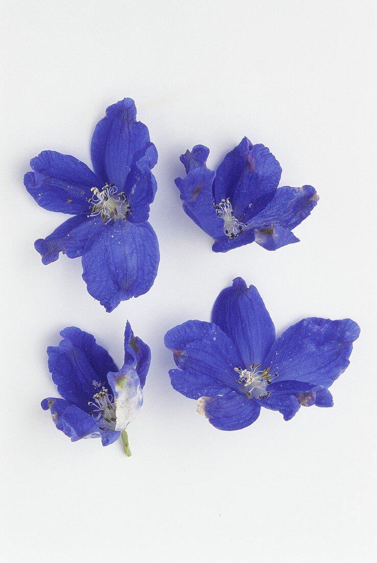 Four blue larkspur flowers