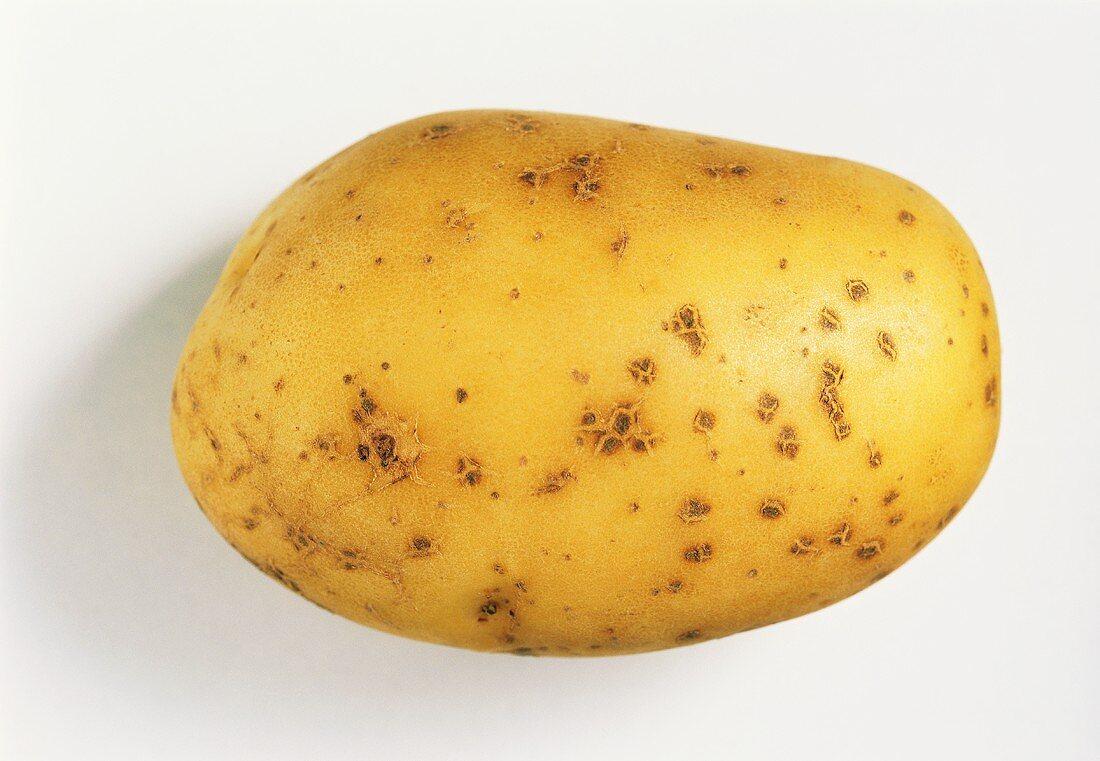 A Primura potato