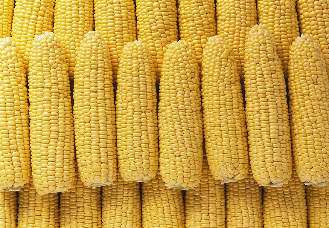 Corncobs lying symmetrically (filling the picture)