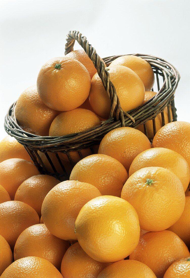 Basket full of oranges in front of many oranges