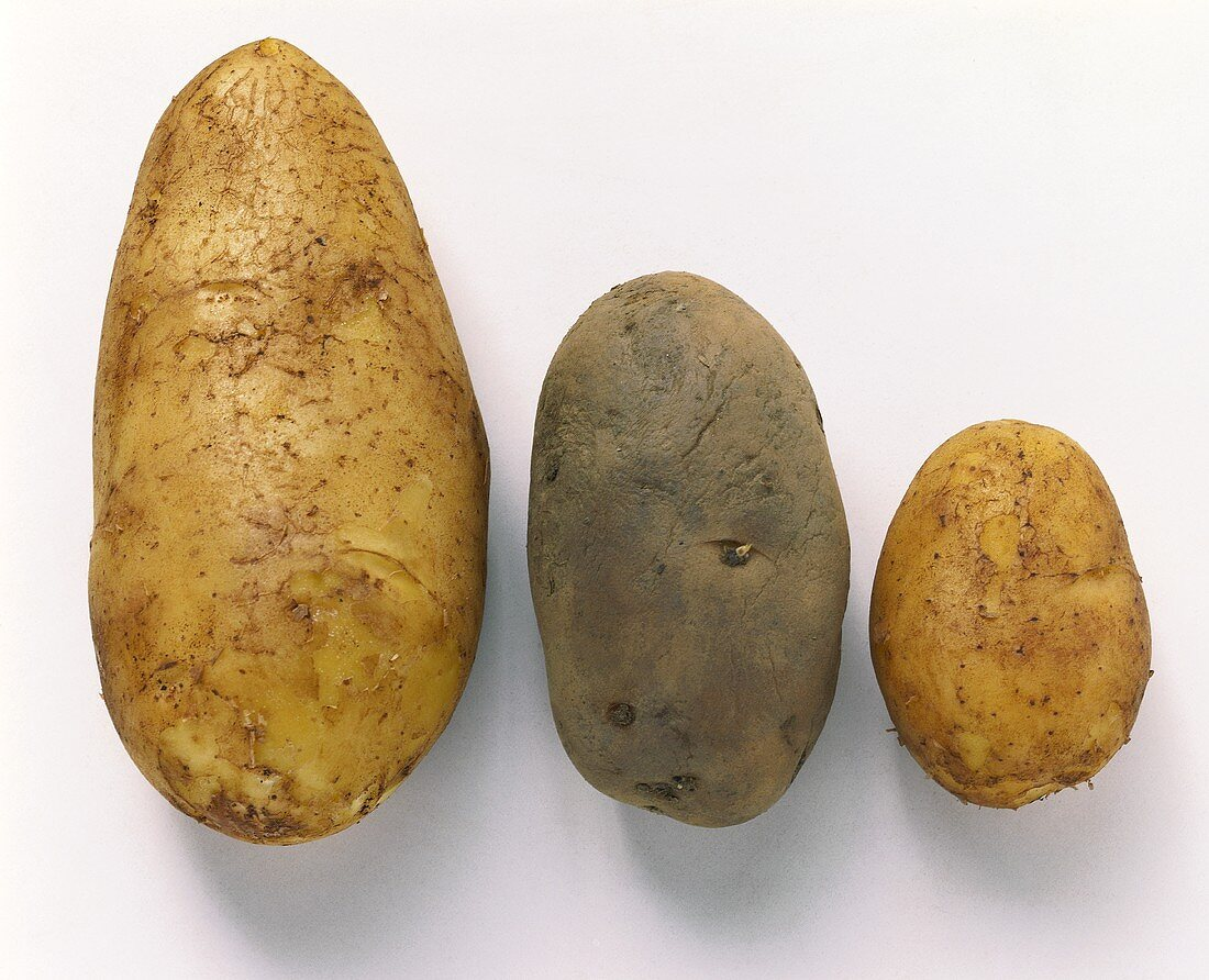 Three potatoes: Spunta, Sieglinde & Agria, side by side