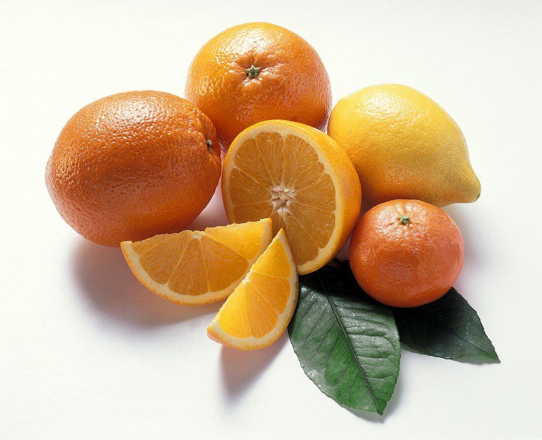 Lemon, oranges, orange slice, mandarin & leaves