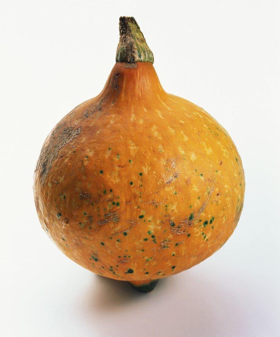 A Japanese pumpkin