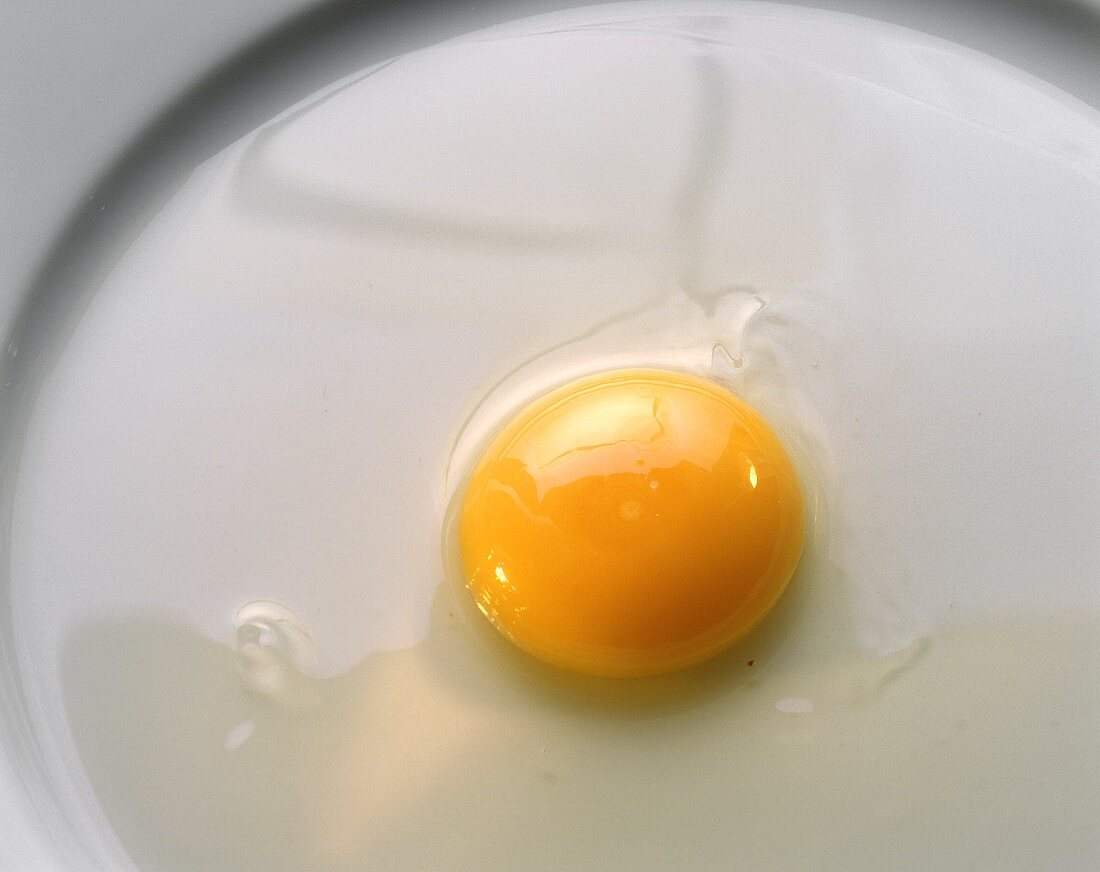 2-3 week-old egg: watery white and flat yolk