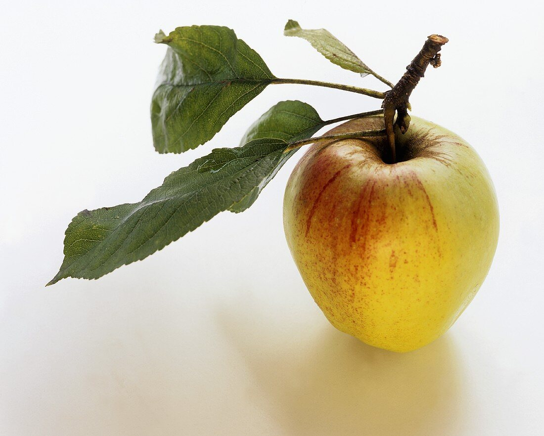 Red and green apple with leaves on stalk