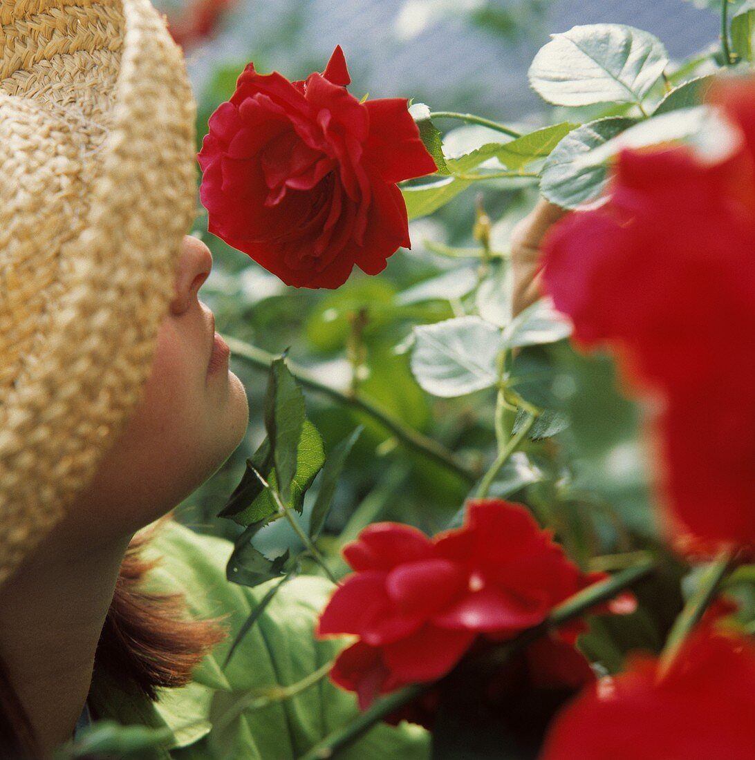 """Young woman smelling climbing rose """"Sympathie"""""""