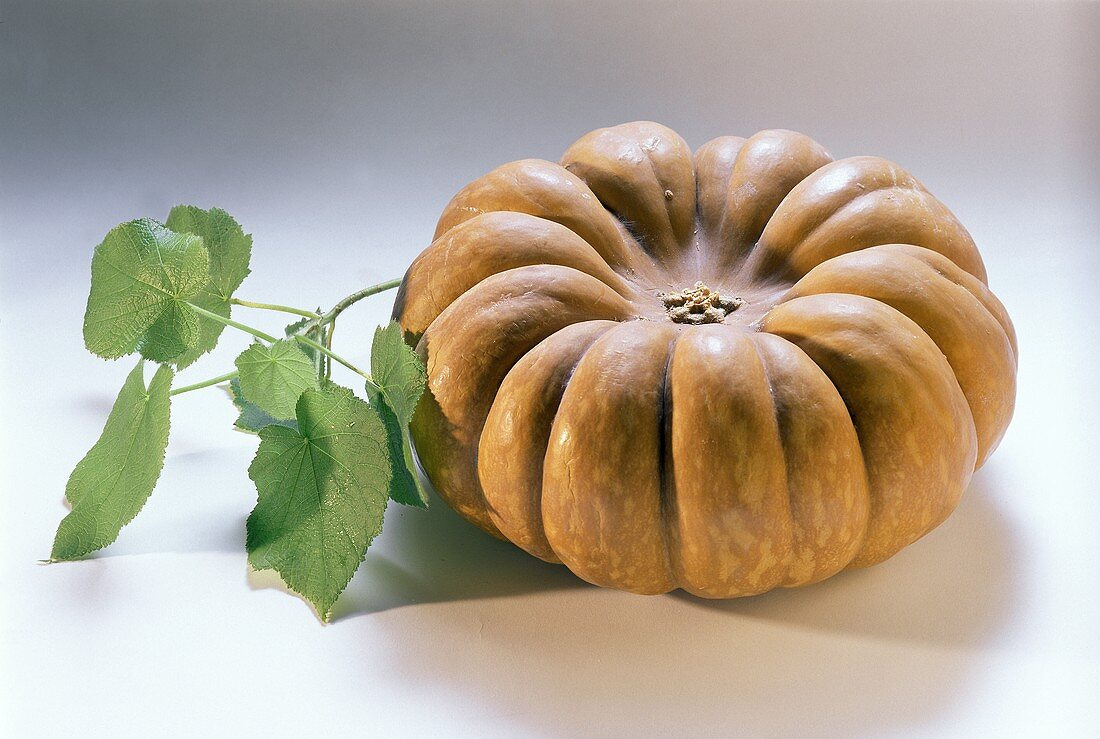 A Japanese pumpkin, beside a branch with green leaves