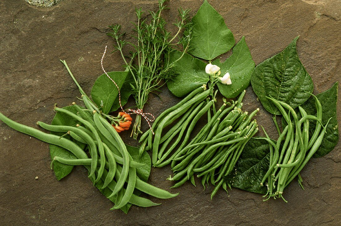 Still life with various green beans and summer savory