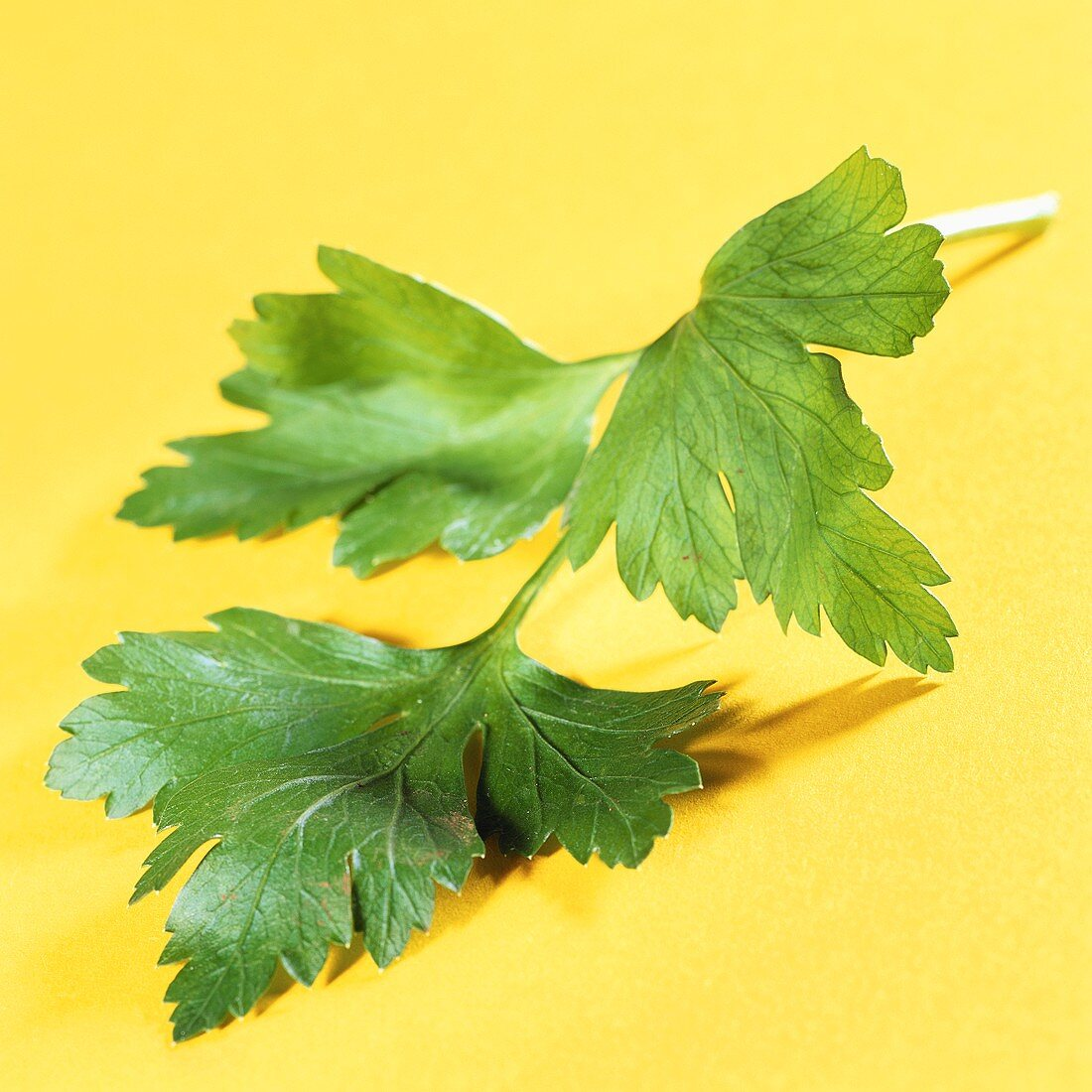 A sprig of parsley