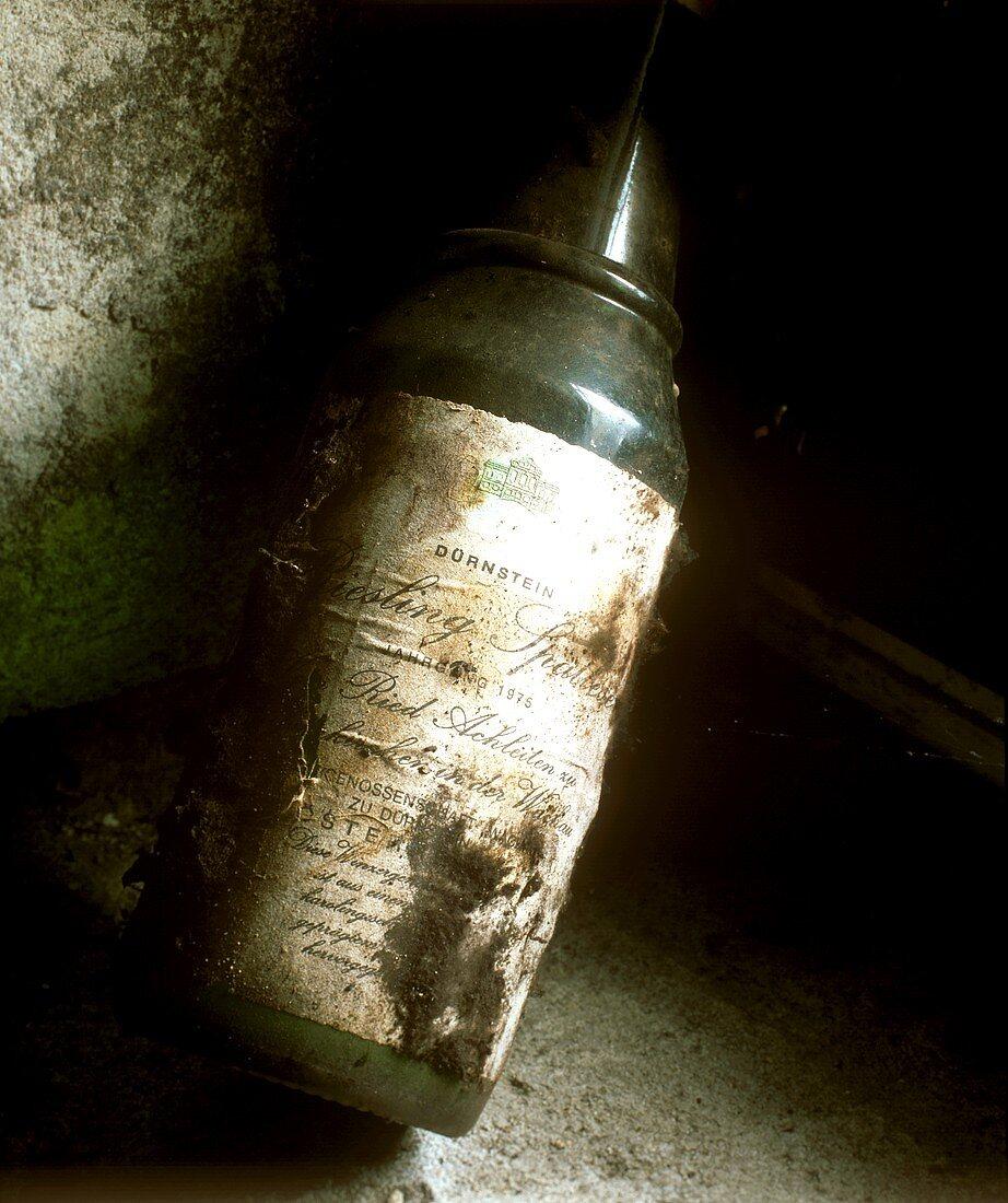 Old Riesling bottle in wine cellar, Dürnstein, Austria