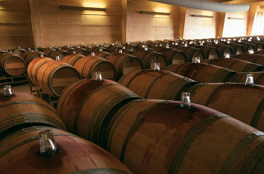 Almaviva barrels in wine store above ground, Maipo, Chile