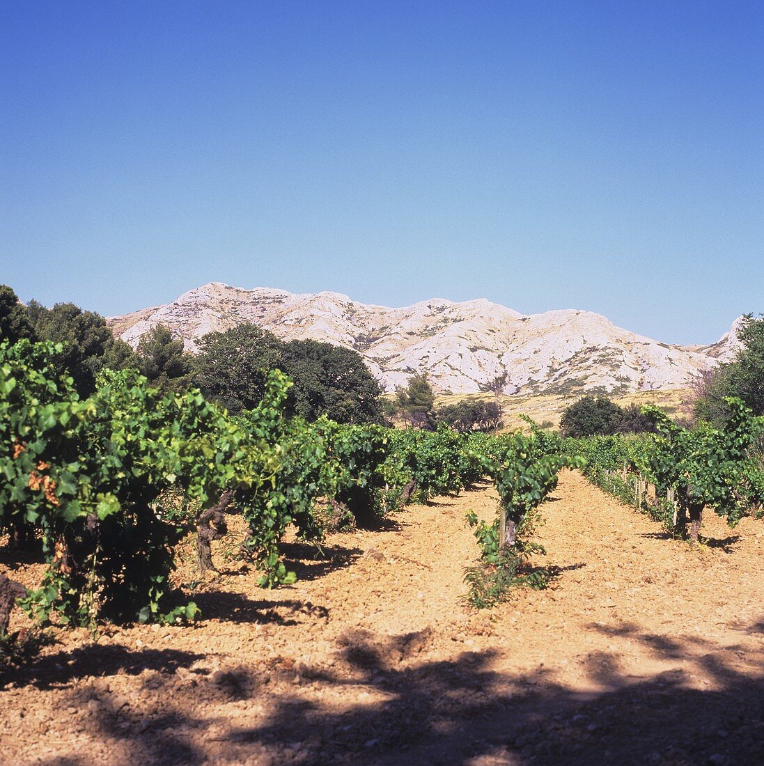 Vineyard in Les Baux-de-Provence district, Rhone, France