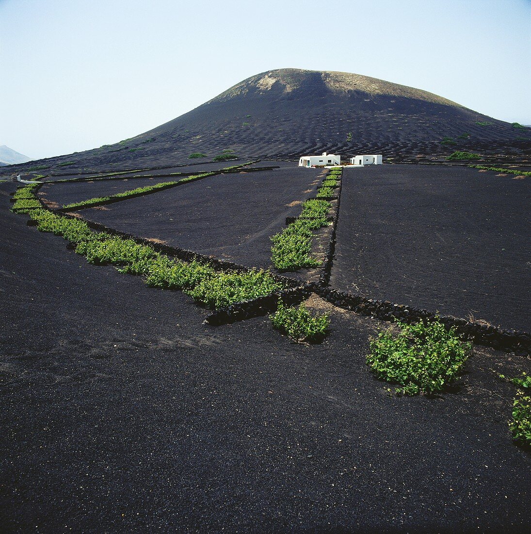 Wine growing on volcanic soil in Lanzarote, Canaries, Spain