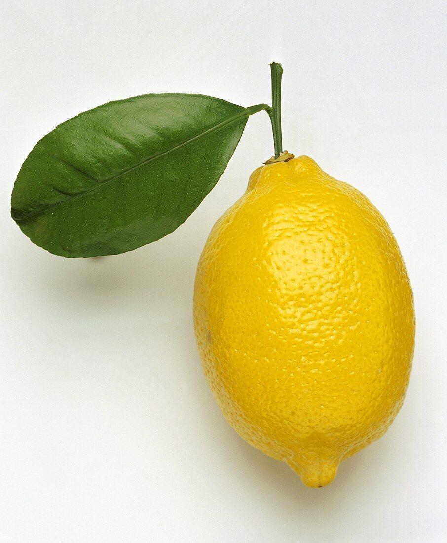 A lemon with leaf