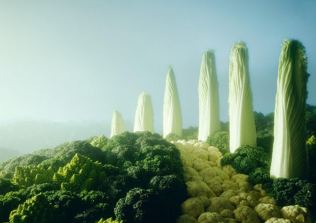 Landscape made of green vegetables