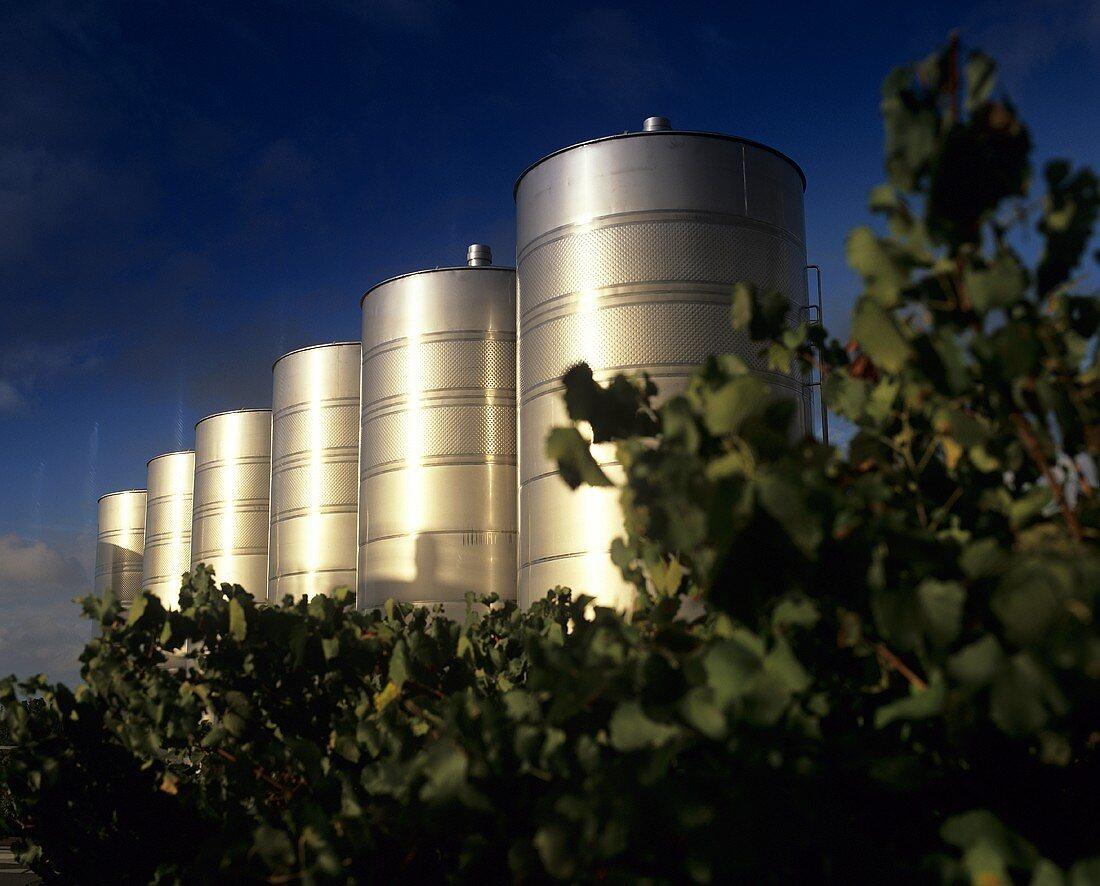 Modern wine tanks behind vineyard, Rosemount, Hunter Valley
