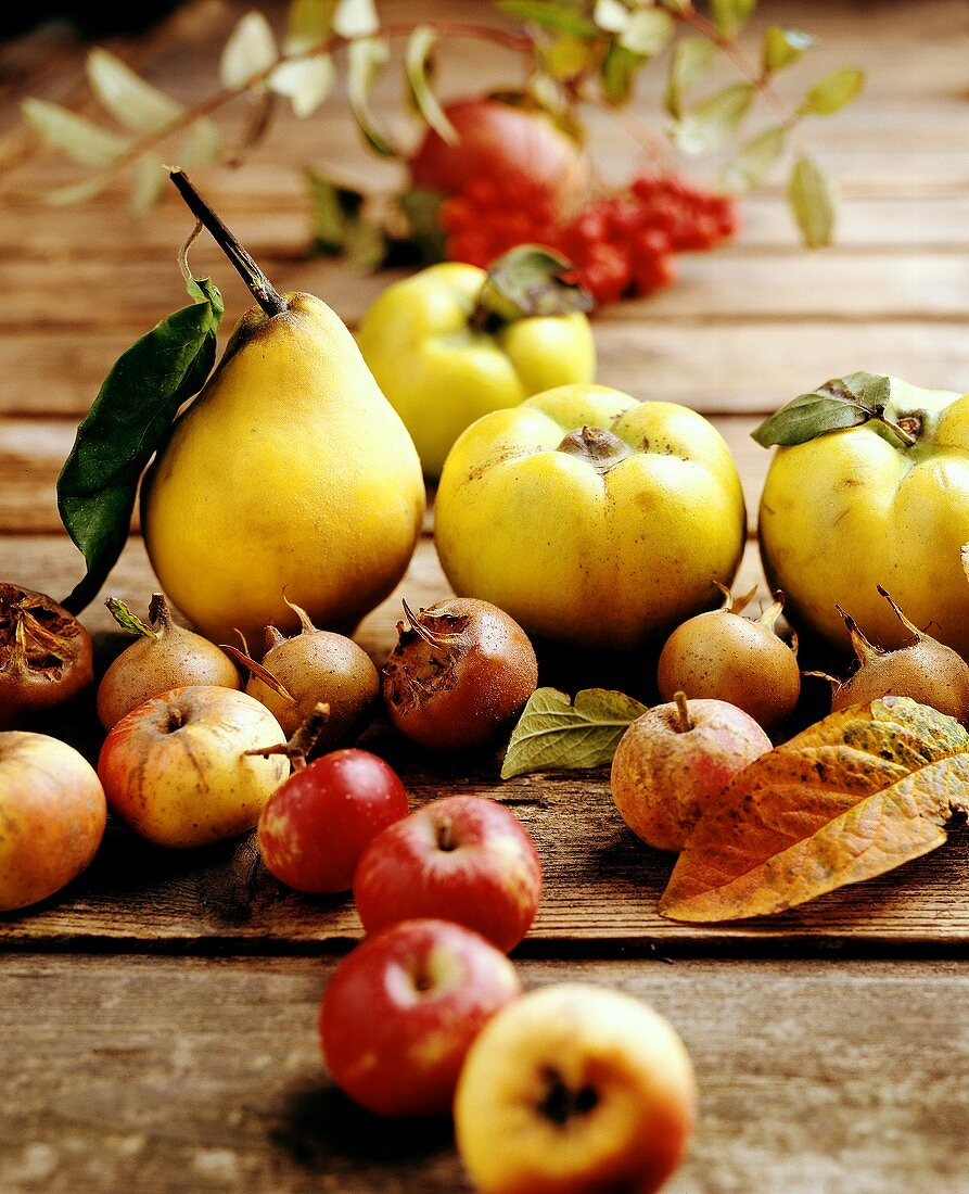 Autumn fruits: quinces, medlars; rowan berries; apples & pears