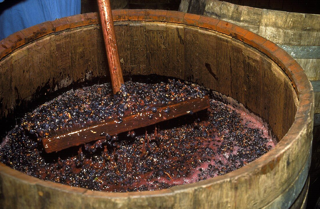 Nebbiolo grapes fermenting in wooden container, Piedmont