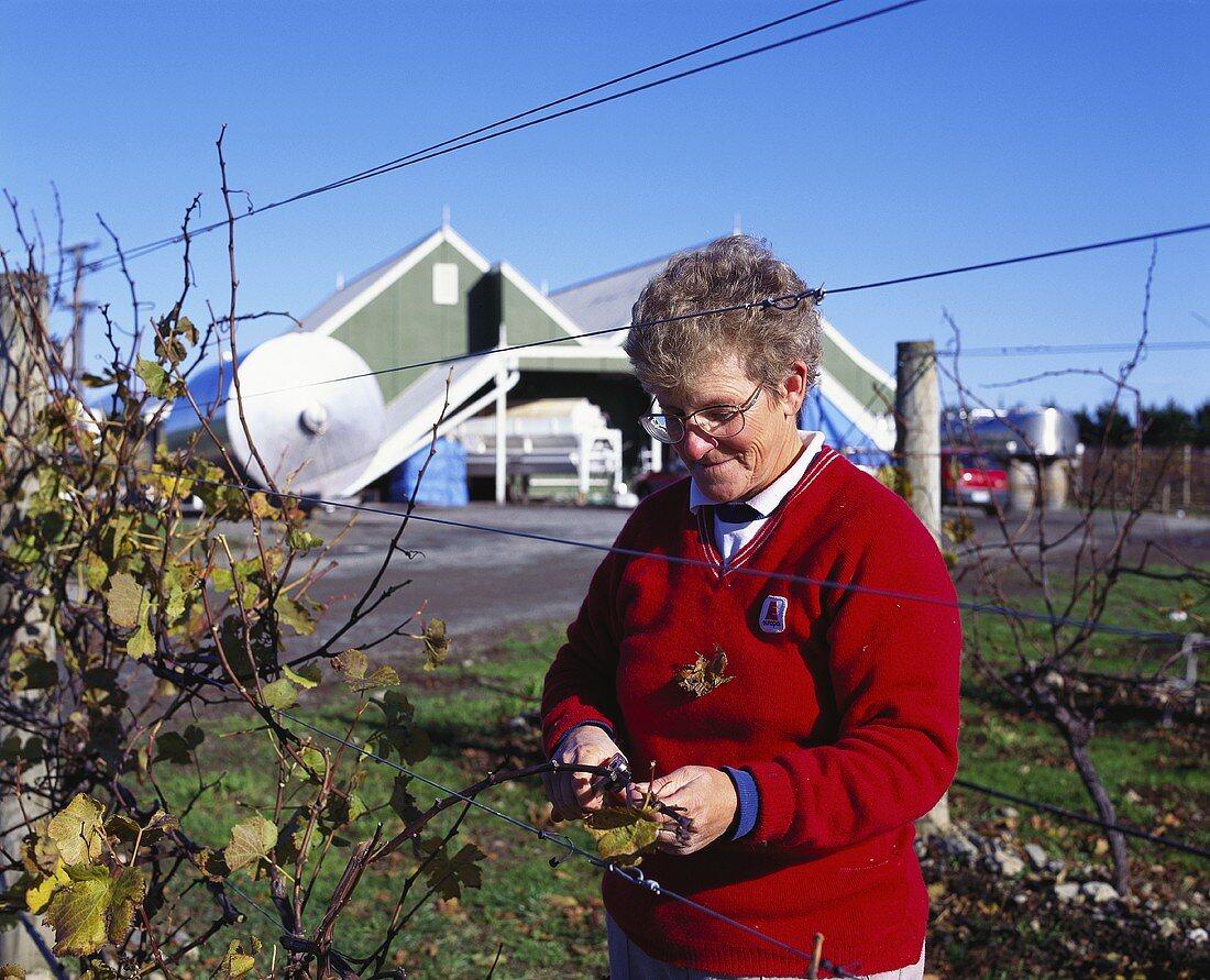 Pruning the vines, Te Karianga Wines, Martinborough