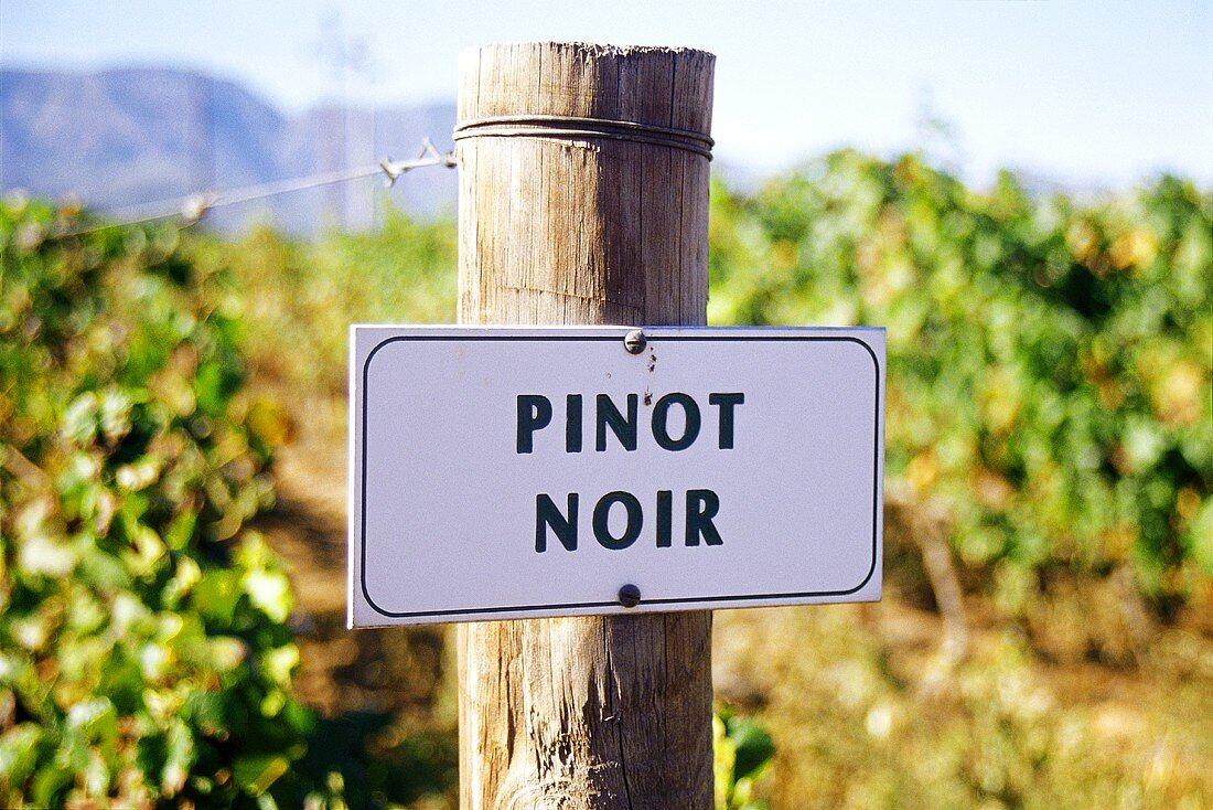 Pinot noir vineyard of Bon Courage Winery, Robertson, S. Africa