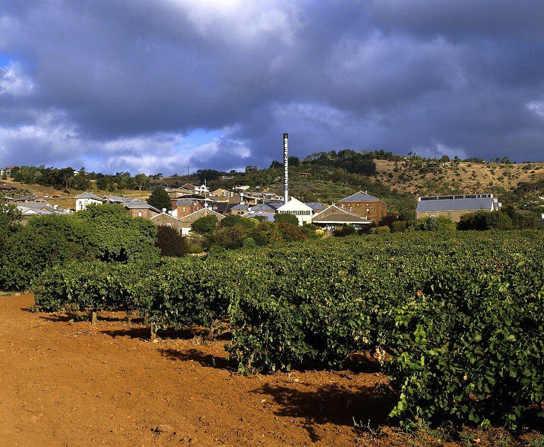 Penfold's Magill Estate, Adelaide, Südaustralien