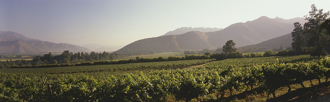 Weinanbau Errazuriz-Panquehue, Aconcaguatal, Chile