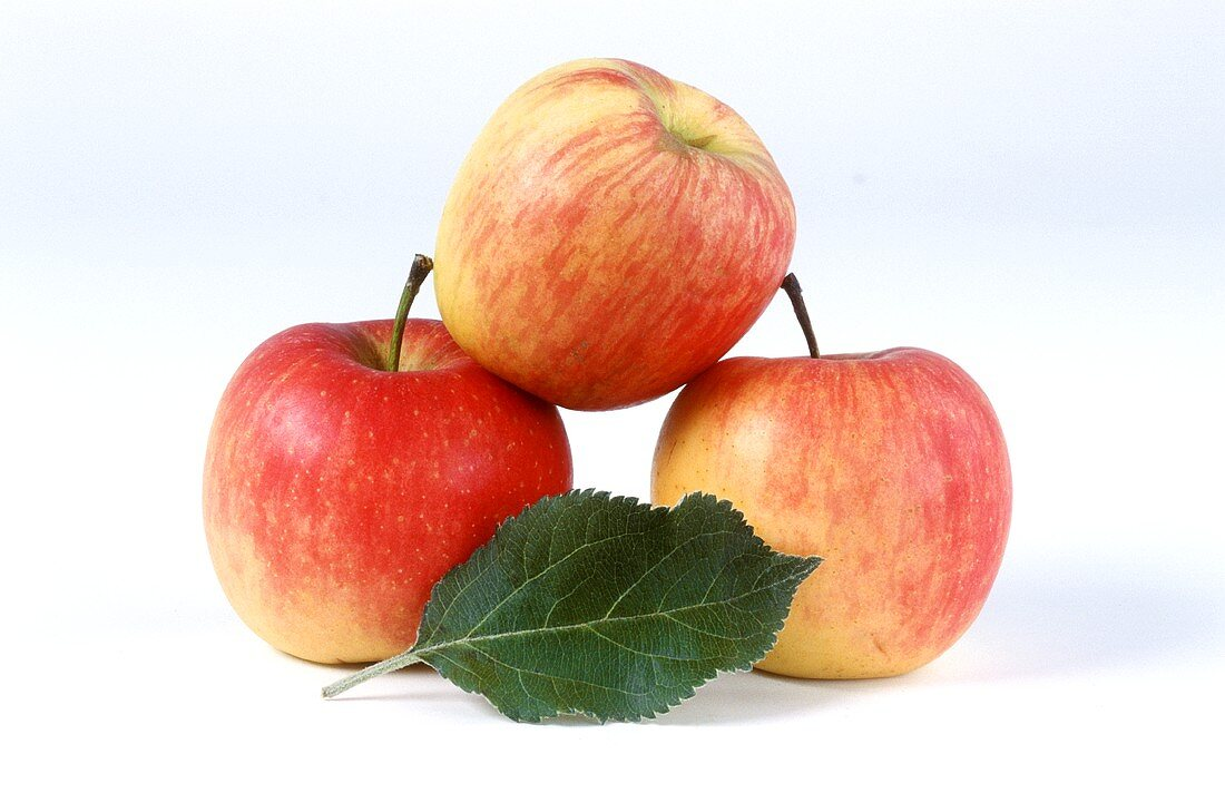 Three Ambassy apples and leaf