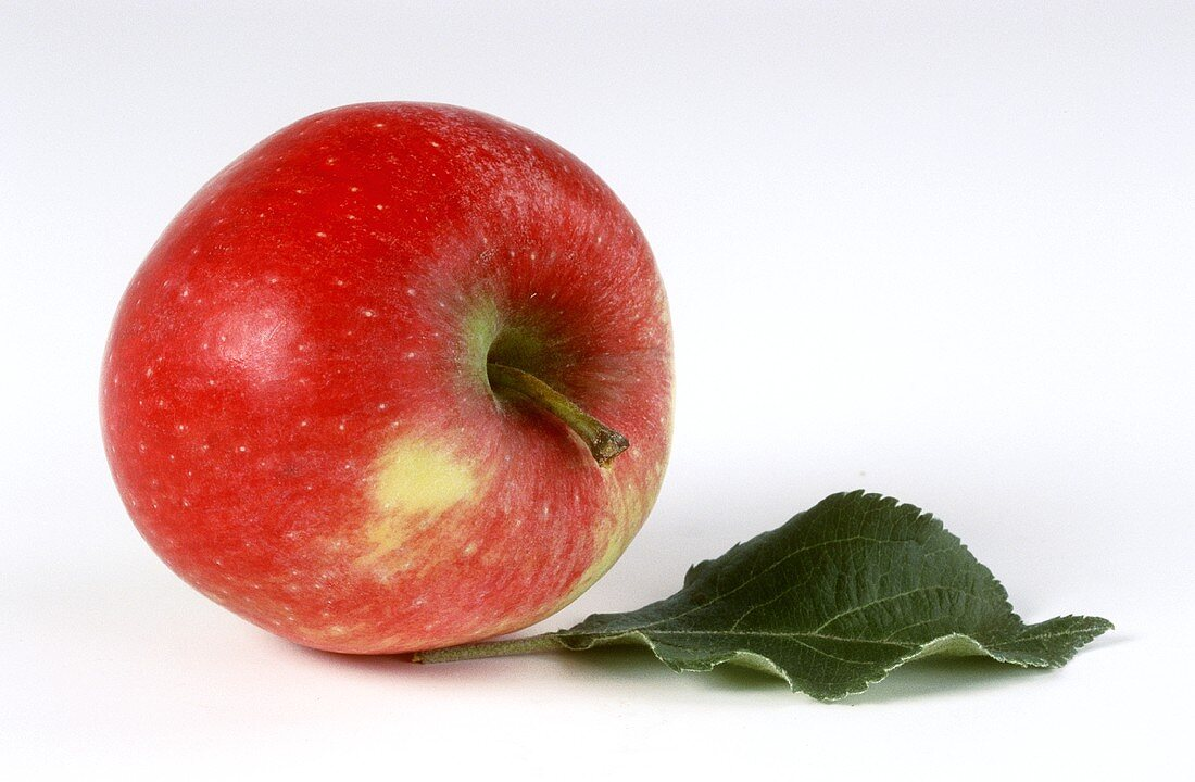 Ambassy apple and an apple leaf