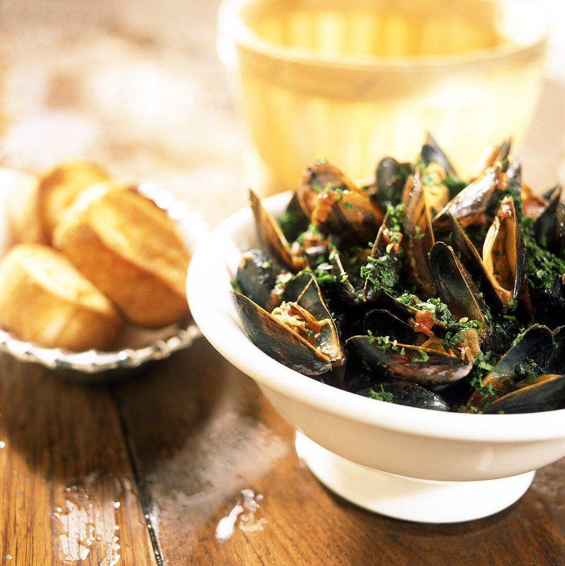 Cozze alla tarantina (mussels in spicy tomato sugo)