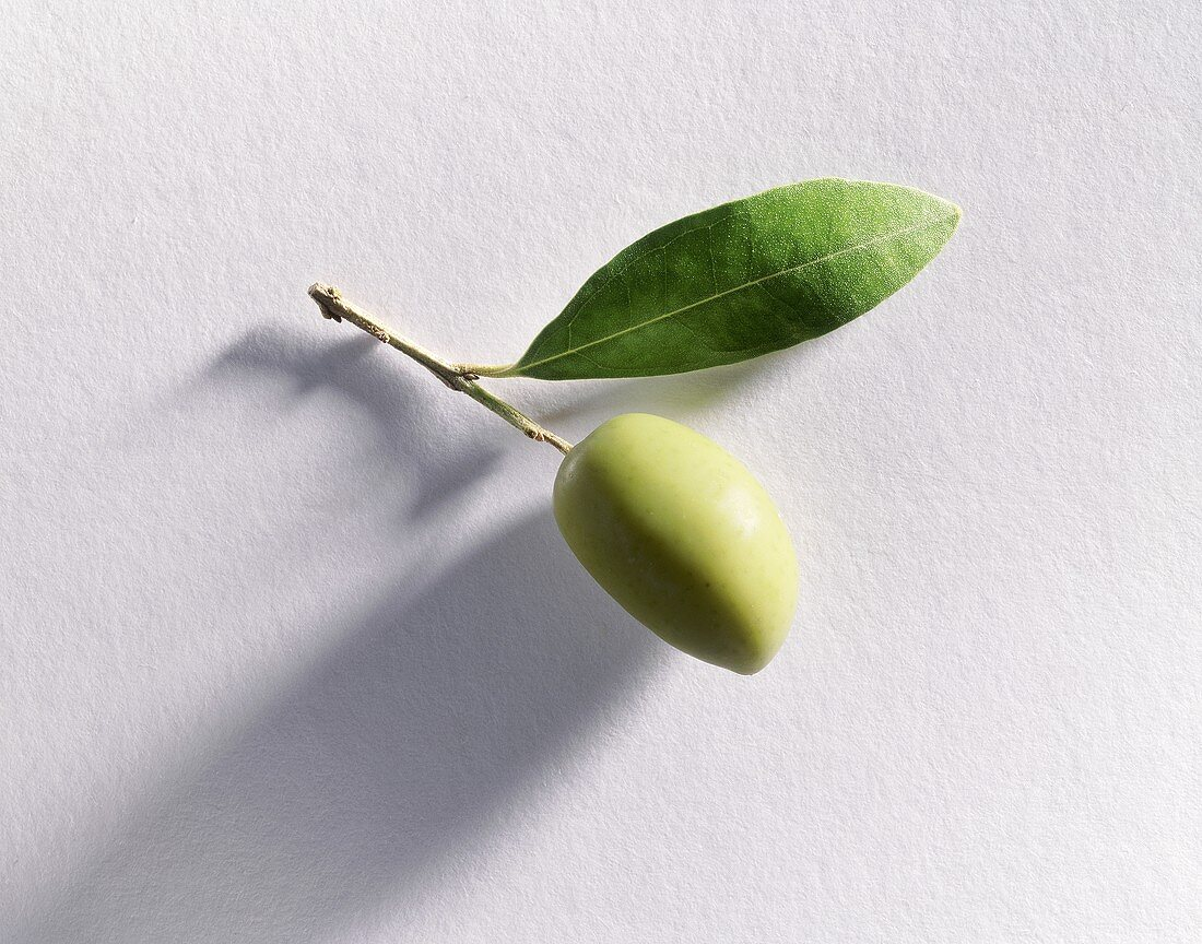 Green olive on stalk with leaf