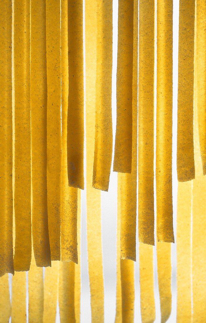 Fresh ribbon pasta, back-lit