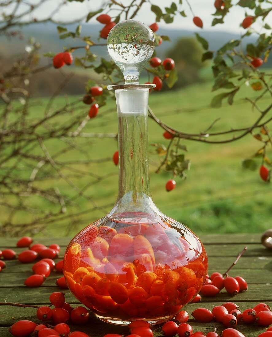 Rose hips infused with schnapps in a carafe