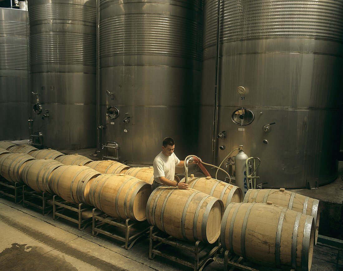 Racking wine, Carmen Wine Cellar, Maipo Valley, Chile