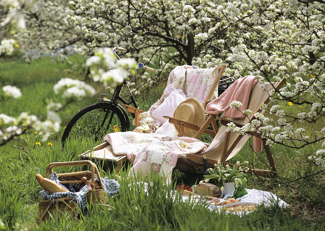 Picnic with deckchairs under flowering fruit tree