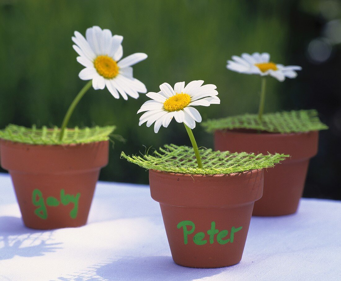 Imaginative place-cards: marguerite in terracotta pot with name
