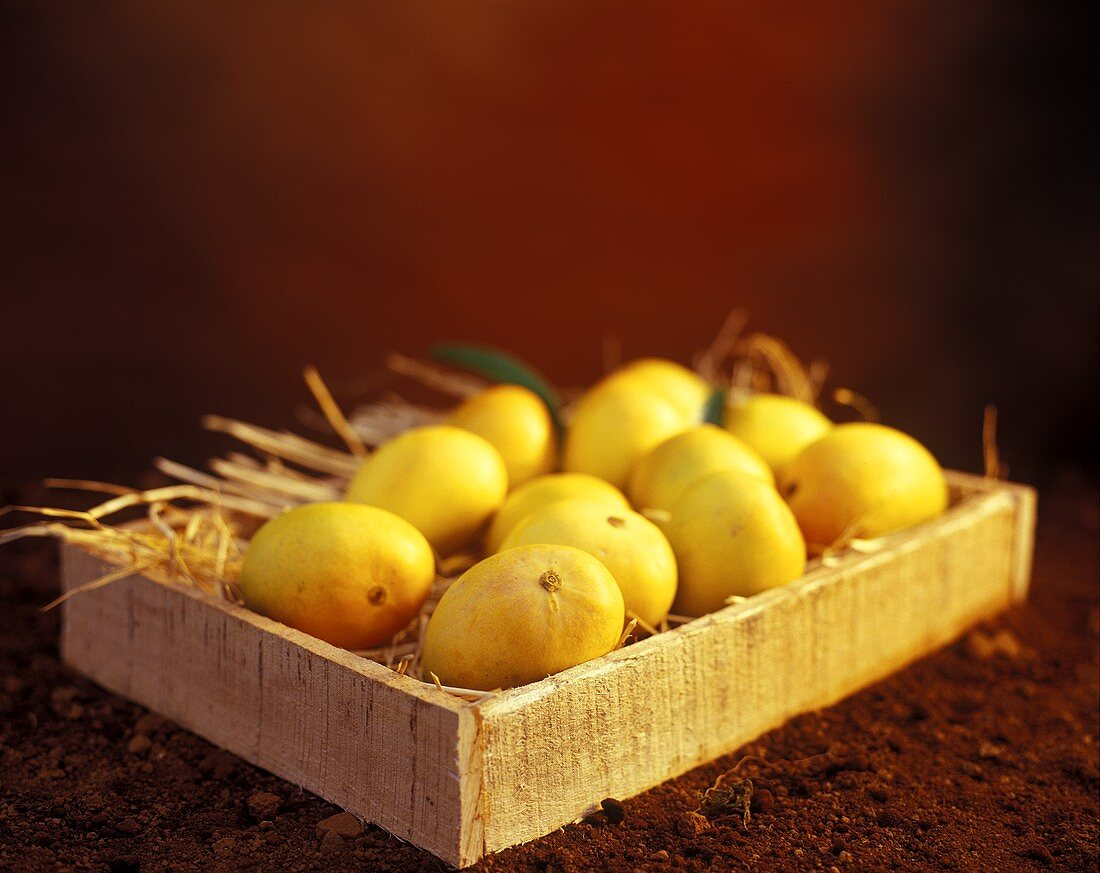 Several 'Alphonso' mangos in a crate