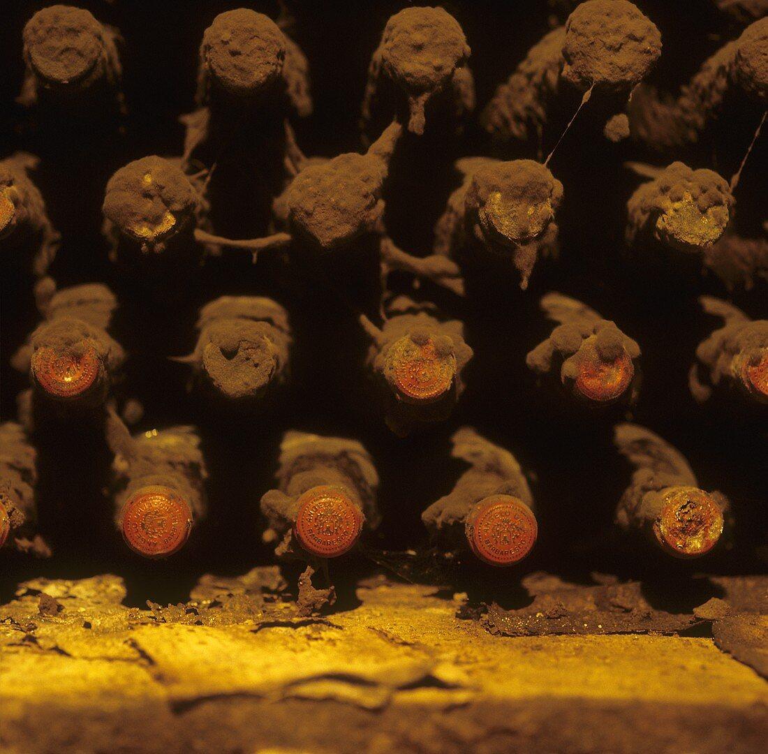 Barolo in the cellar of Angelo Gaja, Piedmont