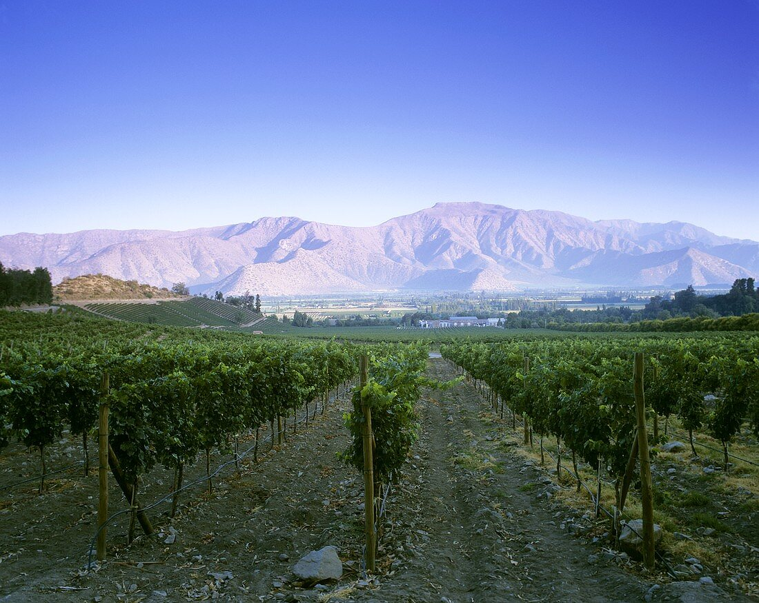 Viña Errázuriz, Panquehue, Aconcagua-Tal, Chile