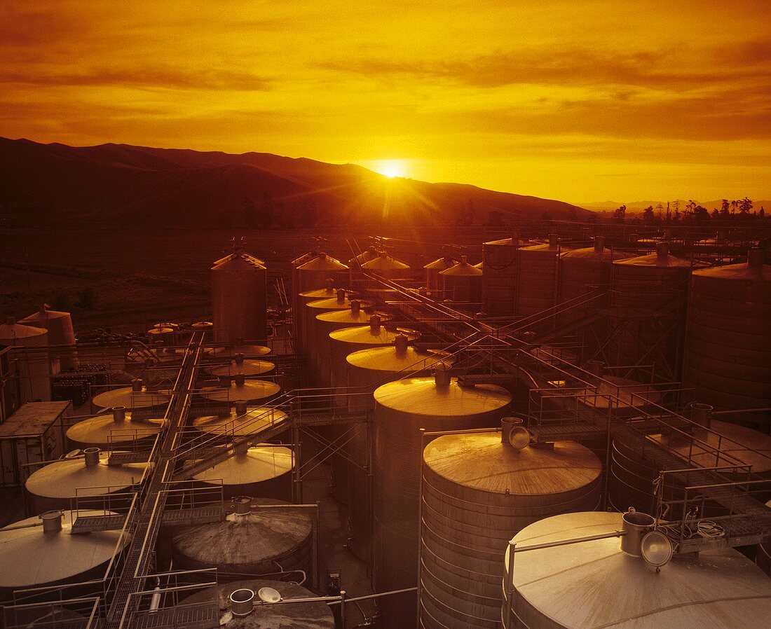 Steel tanks for mass production of wine