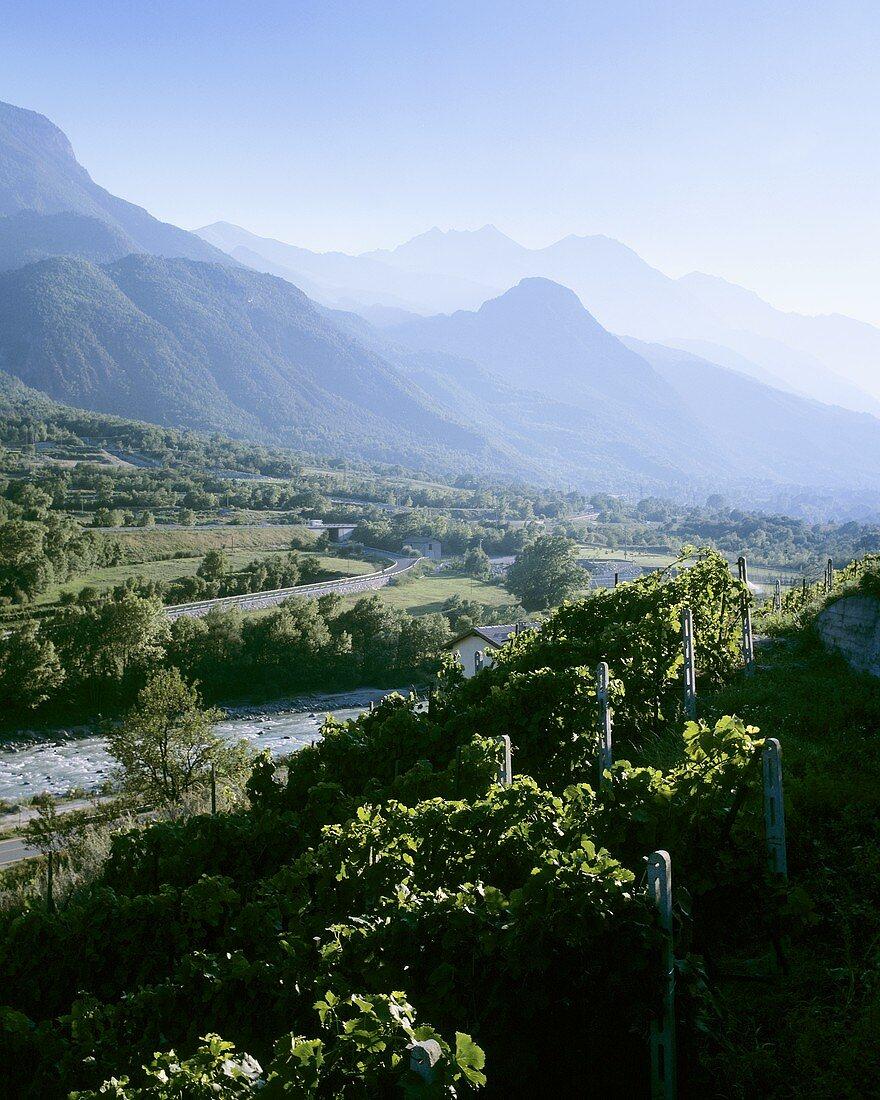 Vineyards near Aosta, Aosta valley, Italy