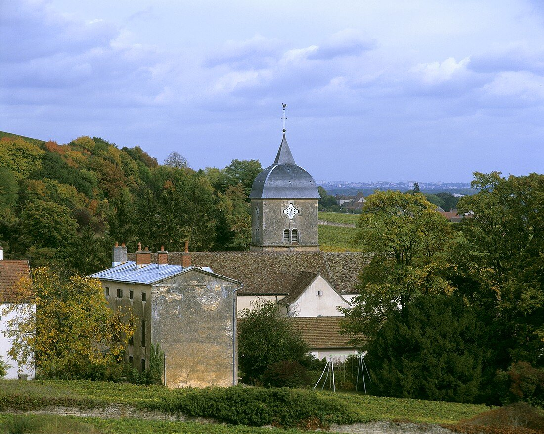 Chambolle-Musigny, Côte de Nuits, Burgundy, France