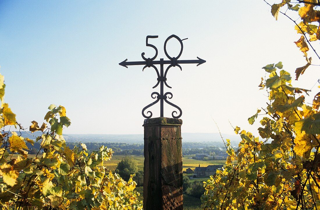 Schloss Johannisberg lies on the 50th parallel of latitude