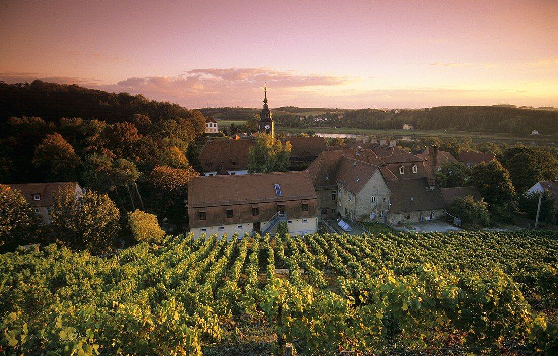 View of Schloss Diesbar-Seusslitz over vineyard, Saxony