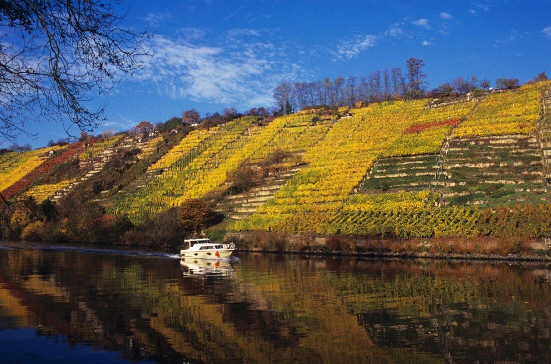 Vineyard near Neckarweihingen-Ludwigsburg, Germany