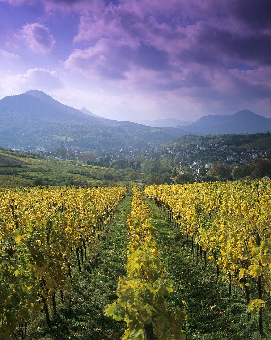 Wine growing region in Rheinland-Pfalz, Germany