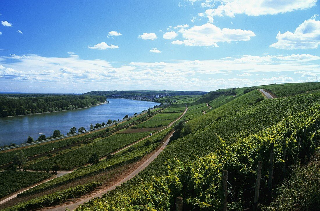 View over the Roter Hang, Rheinhessen, Germany