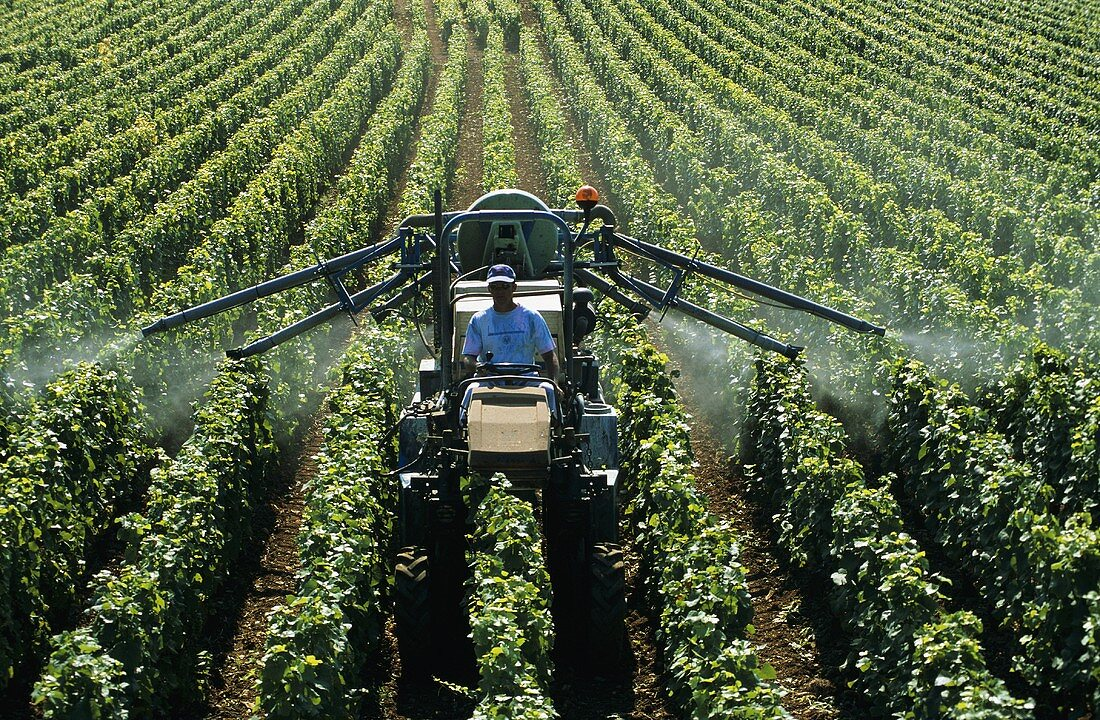 Spraying the vines against botrytis